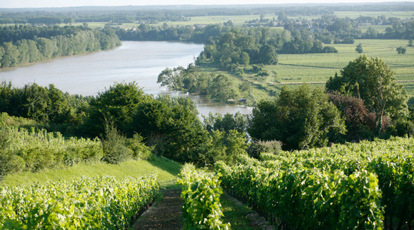 Chinese retailer Jiuxian plans Bordeaux winery deal