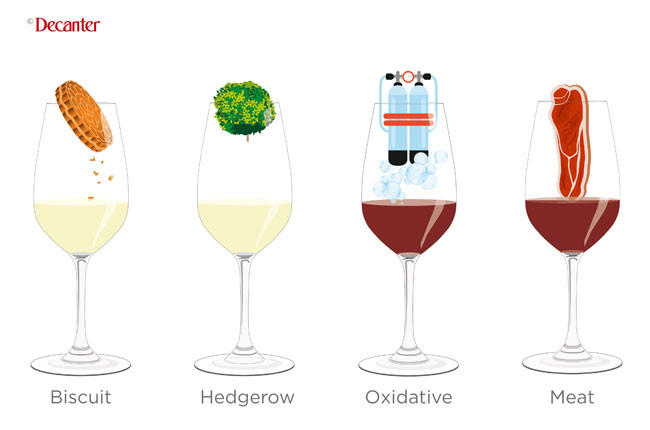Tasting notes decoded: Oxidative, meat, biscuit and hedgerow