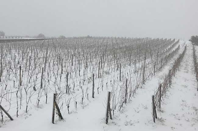 Is snow good for vines? – ask Decanter