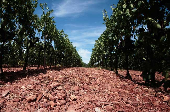 Does soil contribute to the flavour of a wine? – ask Decanter