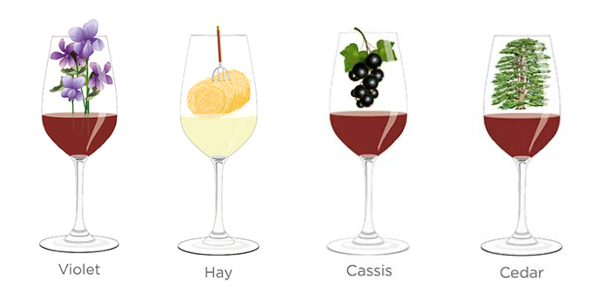 Tasting notes decoded: Violet, hay, cassis, cedar