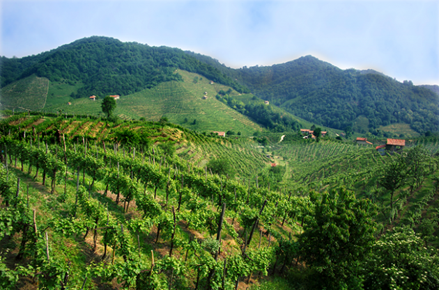 Veneto wine quiz – Test your knowledge