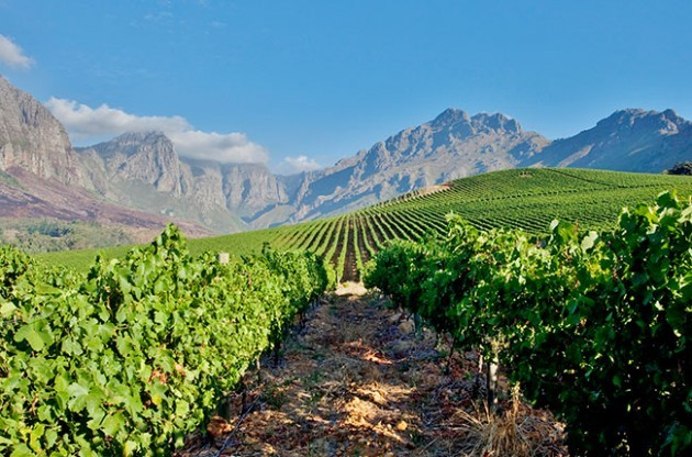 South Africa wine quiz – Test your knowledge