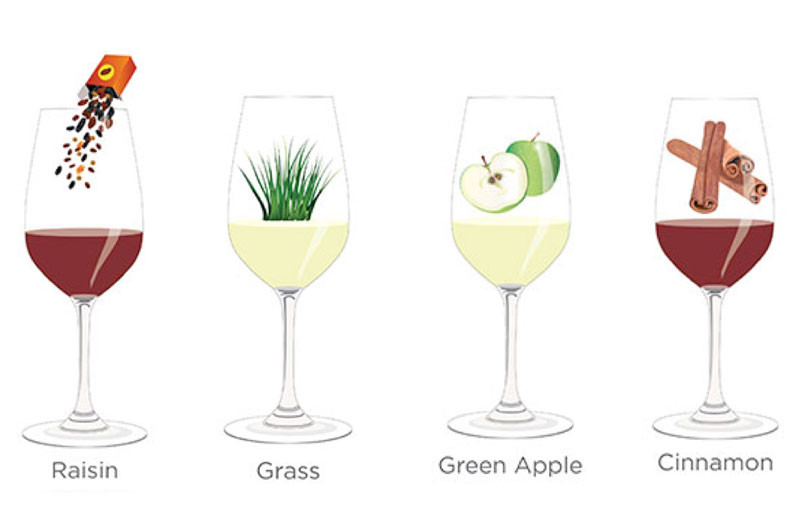 Tasting notes decoded: Raisin, grass, green apple, cinnamon