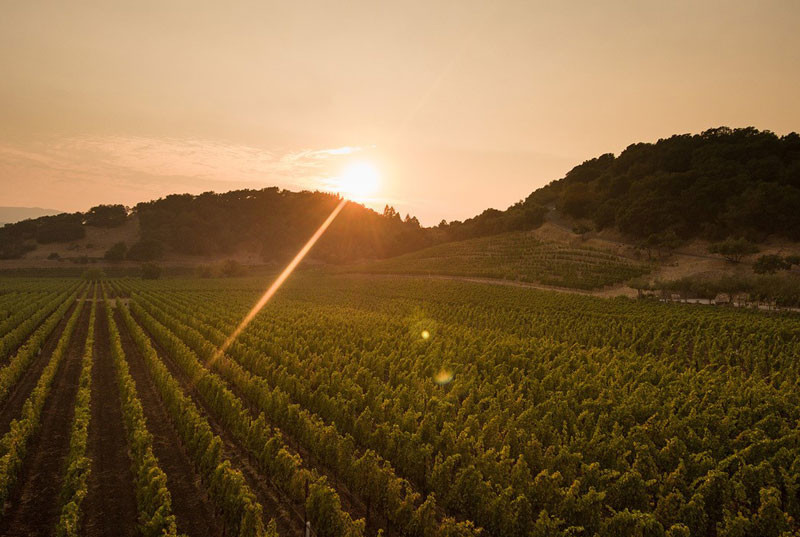 图片版权:Baldacci Family Vineyards