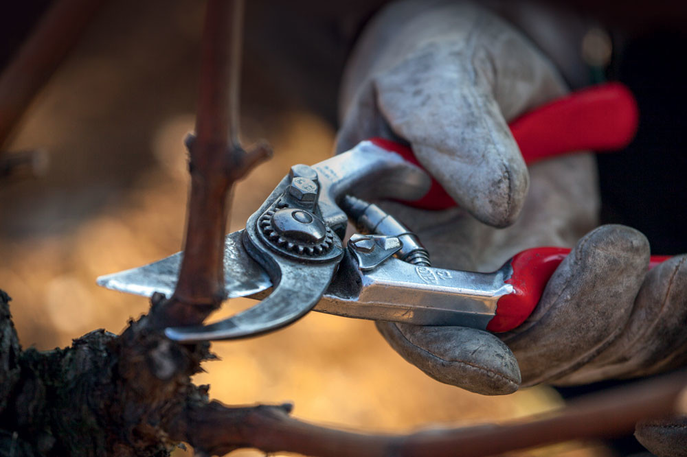Pruning: Why getting it right matters
