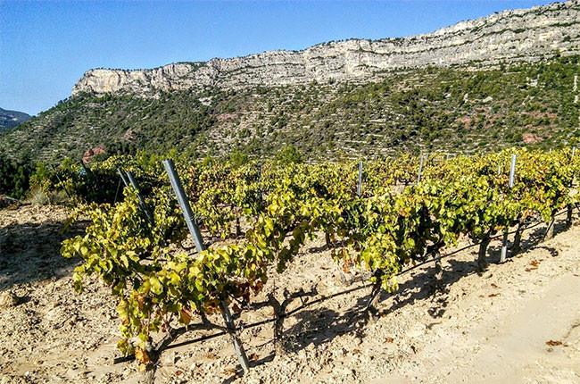 Priorat in-depth and great reds to try