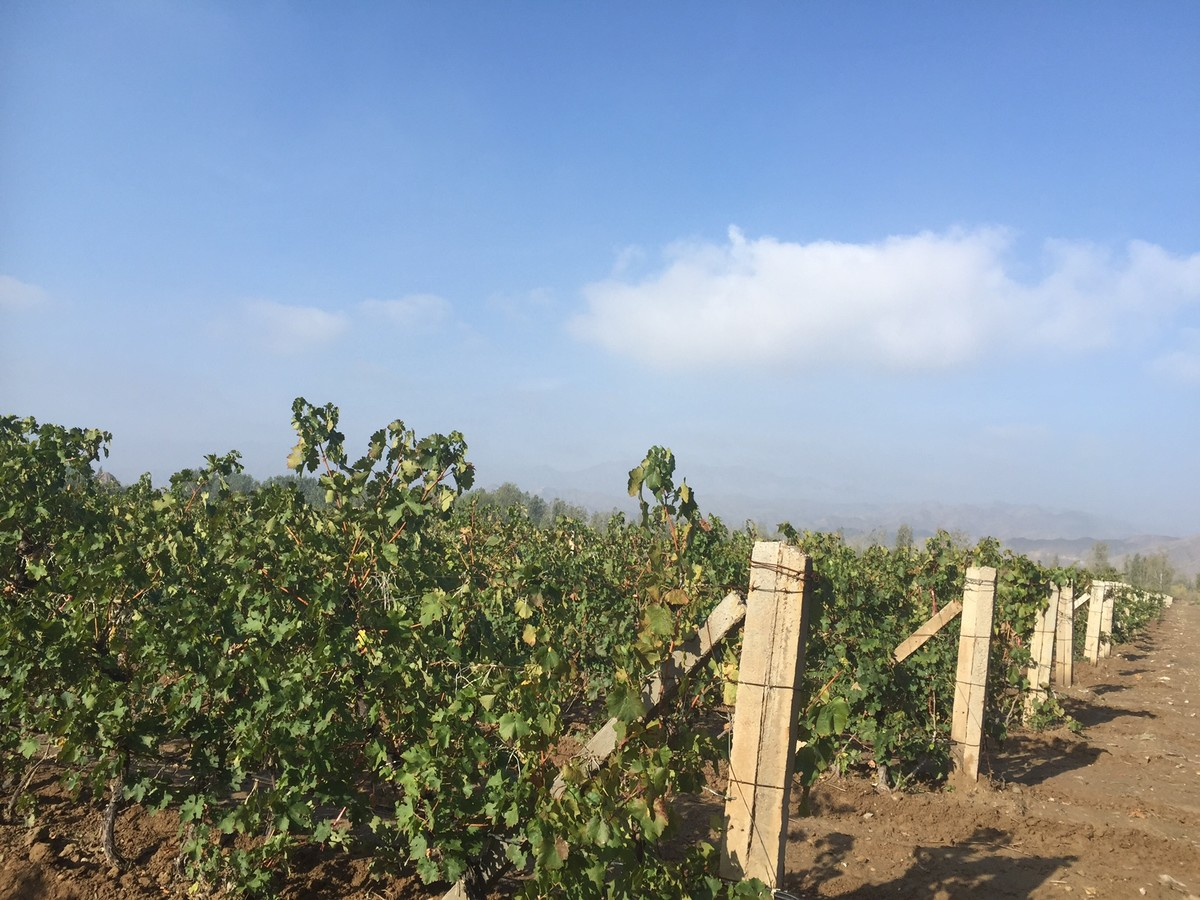 Chinese wine regions: 2017 vintage report - Shandong, Hebei, Beijing and Ningxia