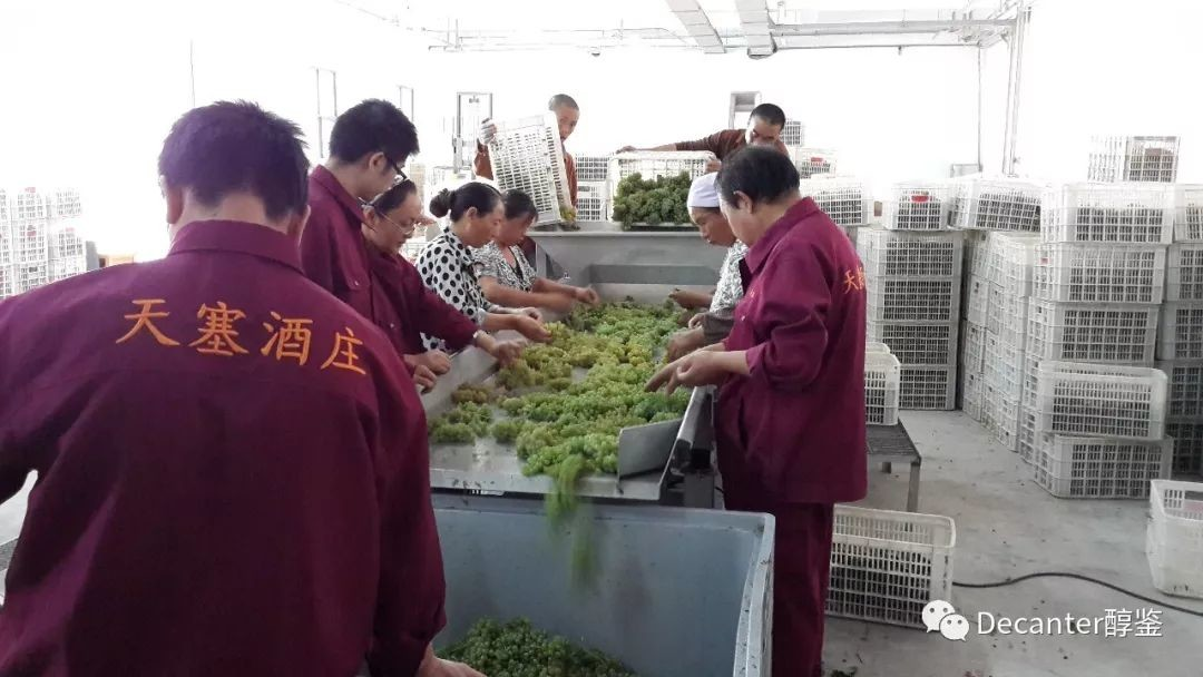 Chinese wine regions: 2017 vintage report - Xinjiang, Yunnan, Shanxi, Gansu and Northeast China