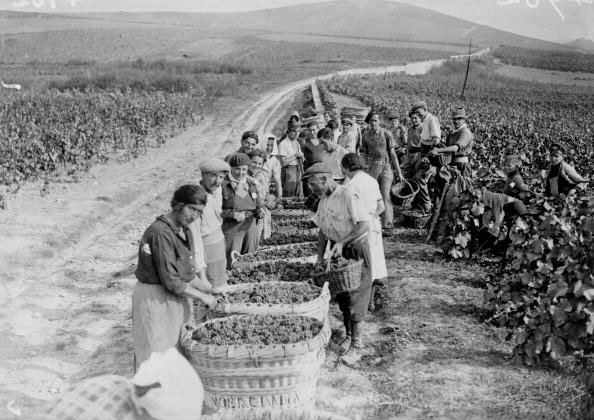 Champagne during WW2: From vines to victory - Decanter