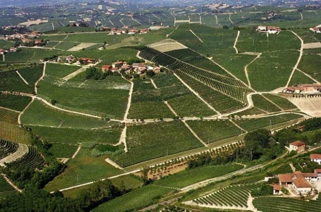 Barbaresco: first among equals