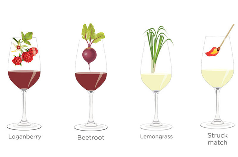 Tasting notes decoded: Loganberry, Beetroot, Lemongrass and Struck match