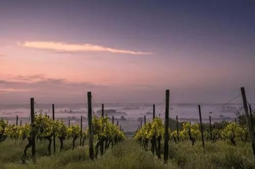 How does diurnal range affect wine? - Ask Decanter