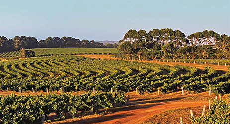 Australian wines test new path to China