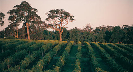 Top red Bordeaux blends of Margaret River 2011 vintage