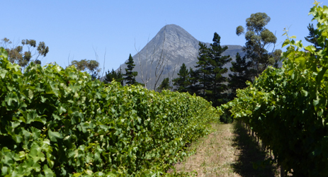 South African wines: a diamond in the making