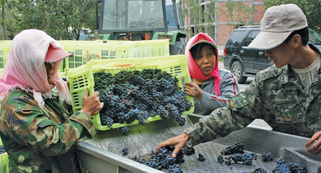 Chinese wine market: how to overcome the barriers