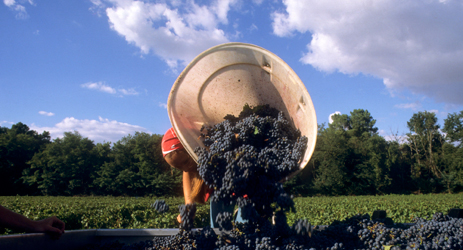 Bordeaux trivia (II) - The secret of the Bordeaux Blends - climate