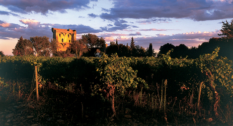 Wine regions in Southern Rhone - Chateauneuf-du-Pape
