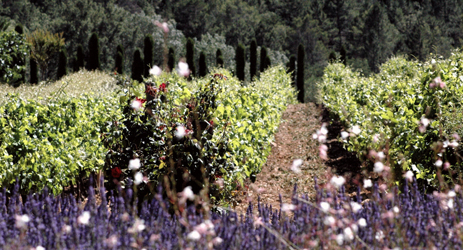 Wines of Southern France (I) - Provence