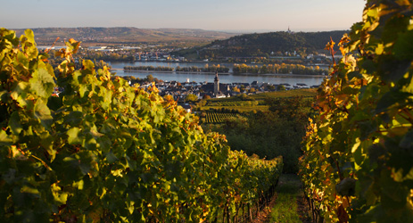 German wine regulations (I) - Geographic Areas
