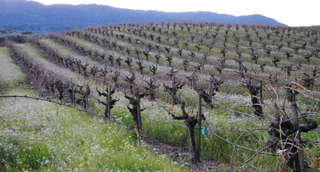 California wines (II)-Napa Valley, Carneros and Sonoma County
