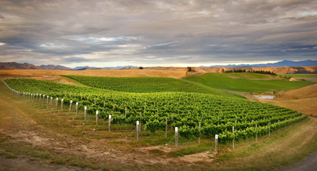 New Zealand wine regions - South Island