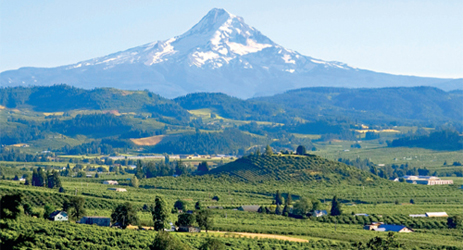 Wines from Oregon and Washington