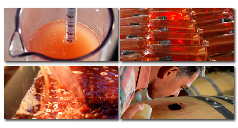 Why Rosés are of different colours?