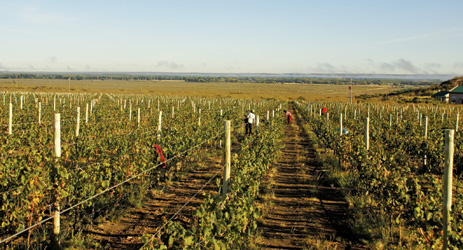 Seven questions to ask before you buy a vineyard
