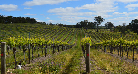 Australia fuels Recovery in China wine imports