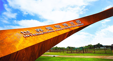 China's new International Grape Exhibition Garden opens in Beijing's Yangqing