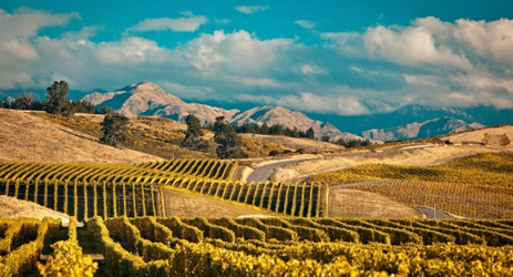 Hong Kong firm buys New Zealand vineyards for NZ$46.4m