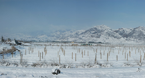 Ningxia winemakers set to benefit from new extreme weather warning system