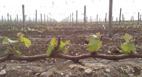 Ningxia vineyards get help from Israeli water experts