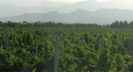 Ningxia gets power to import grapevines directly