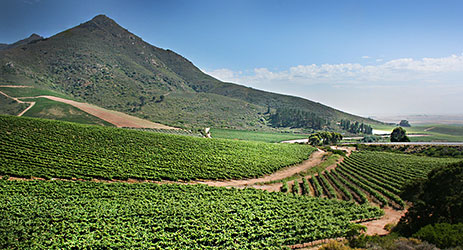 South African Swartland Winery sold to Chinese investor