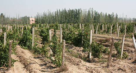 Ningxia aims to be wine talent hub