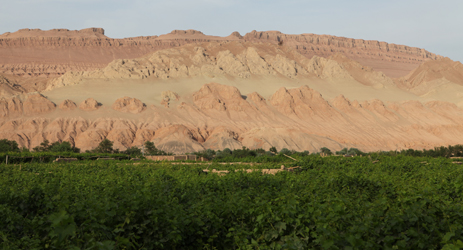 First Xinjiang wine regions expected to receive geographic indication protection